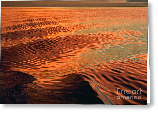 Greeting Card featuring the photograph Florida Bay by Doug Herr