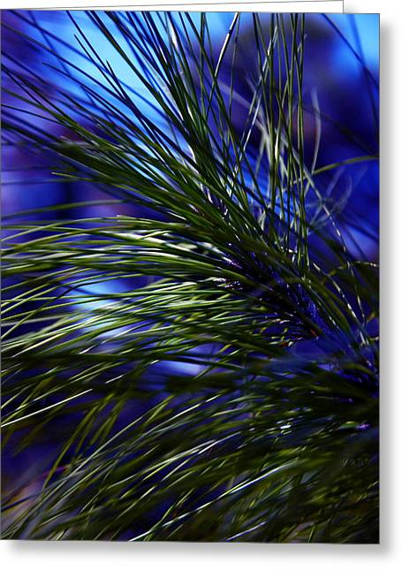Florida Grass Greeting Card