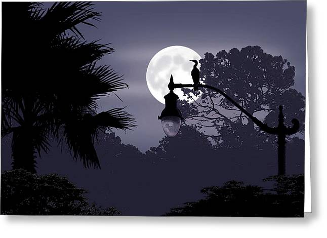 Florida Moonlight Greeting Card by Ginny Schmidt