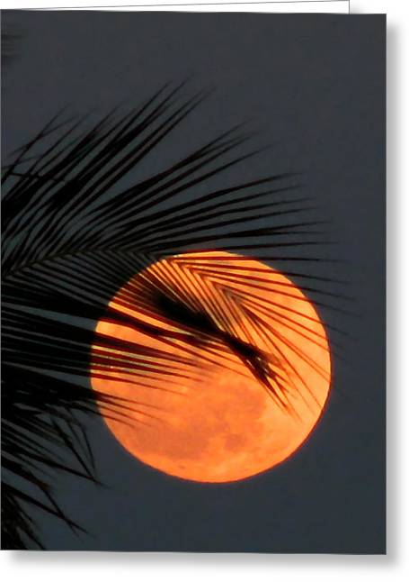 Florida Moonrise Greeting Card by Peg Urban