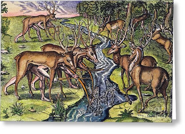 Florida Native Americans: Hunt, 1591 Greeting Card