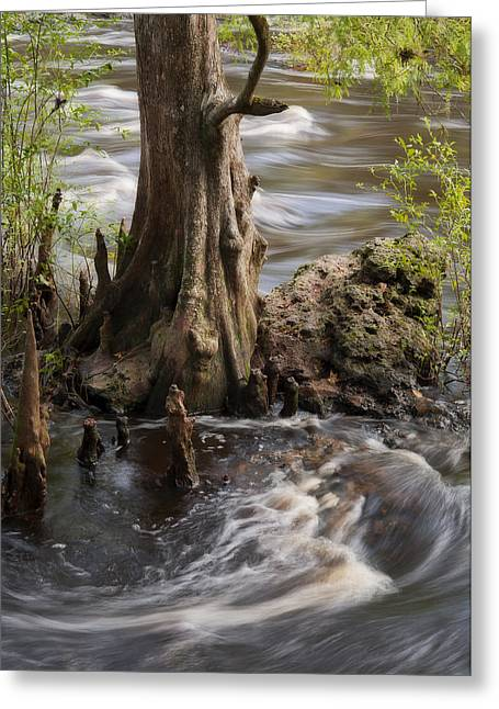 Florida Rapids Greeting Card by Steven Sparks