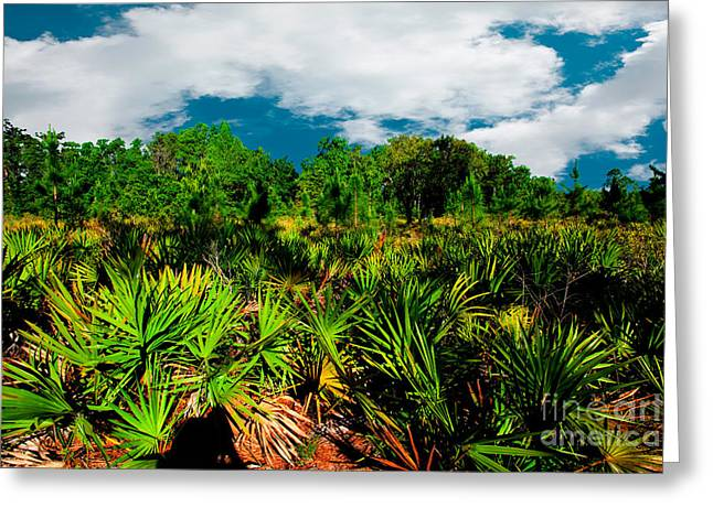 Florida Scrub 1 Greeting Card by Carson Wilcox