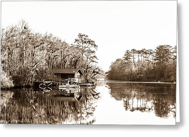 Greeting Card featuring the photograph Florida by Shannon Harrington