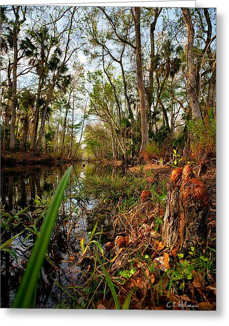 Florida Stream Greeting Card by Christopher Holmes