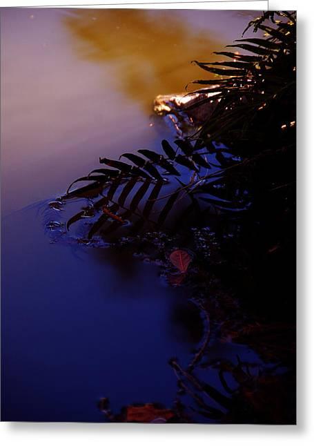 Florida Sunset 2 Greeting Card