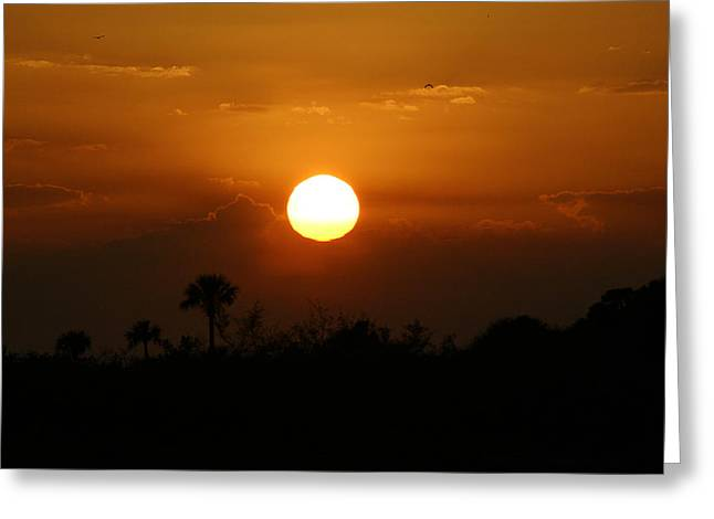 Greeting Card featuring the photograph Florida Sunset by Jeanne Andrews