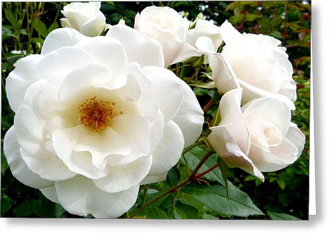 Flourishing Iceberg Roses Greeting Card by Will Borden