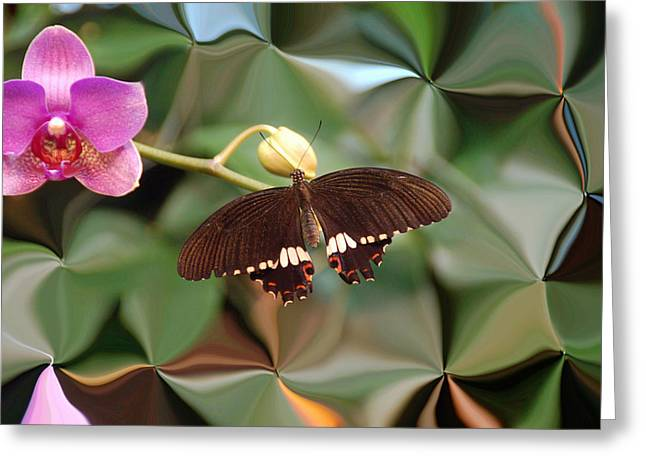 Flower And Butterfly Greeting Card