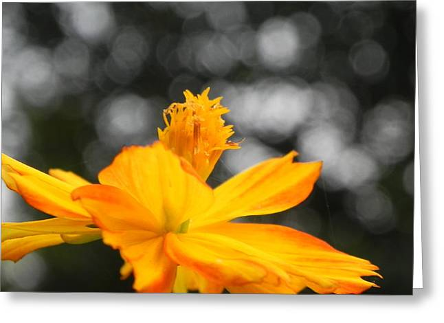 Flower Greeting Card by Arindam Raha