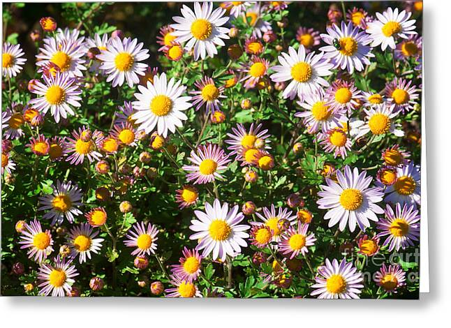 Greeting Card featuring the photograph Flower Assault by Jim Moore