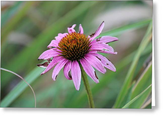 Flower At Waterfall Glen Forest Preserve Greeting Card