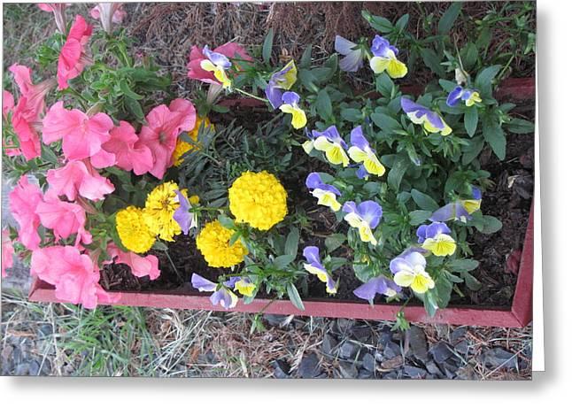 Flower Basket 2 Greeting Card by Amy Bradley