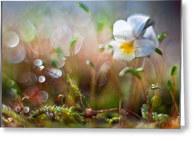 Flower Bell Greeting Card by Adrian Krol