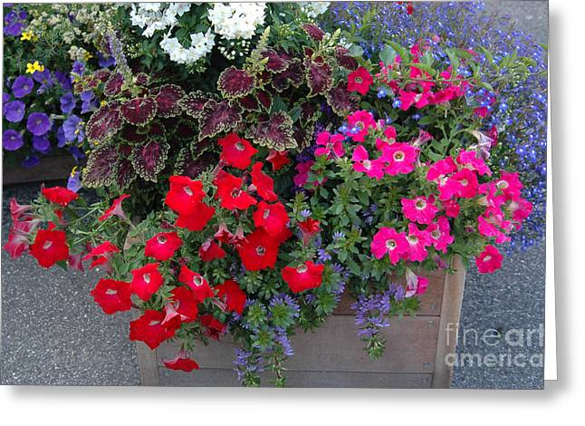 Flower Box Greeting Card by Vilas Malankar