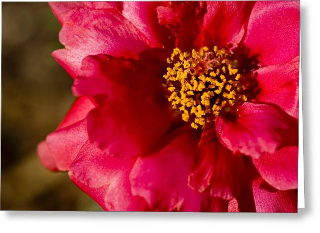 Greeting Card featuring the photograph Flower Carpet Rose by Rob Hemphill