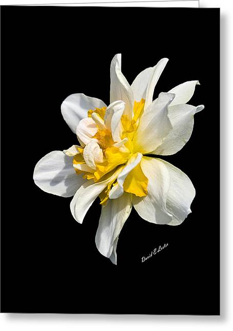 Greeting Card featuring the photograph Flower by David Lester