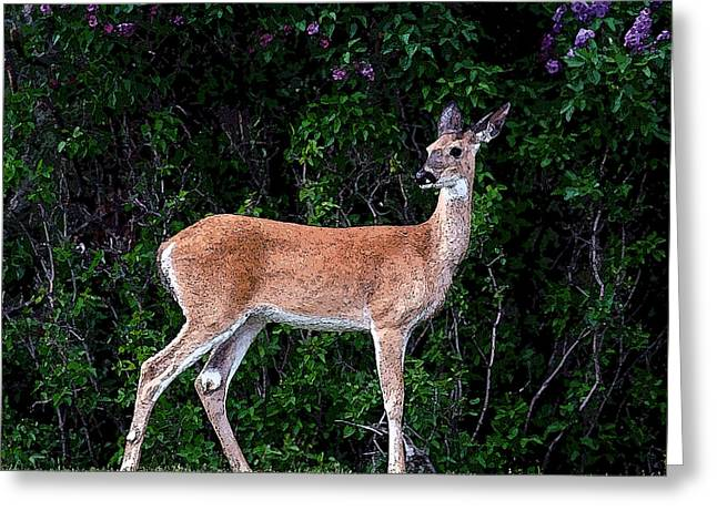 Flower Deer Greeting Card by Steve McKinzie