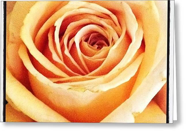 #flower #flowers #flowerlovers #roses Greeting Card