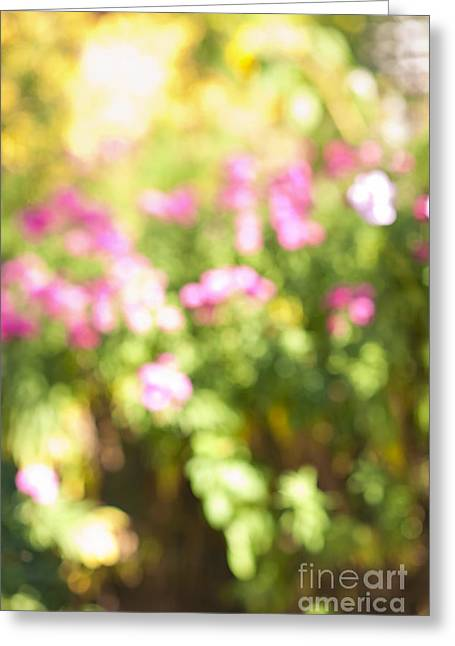 Flower Garden In Sunshine Greeting Card by Elena Elisseeva
