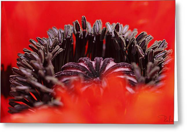 Greeting Card featuring the photograph Flower Heart by Raffaella Lunelli
