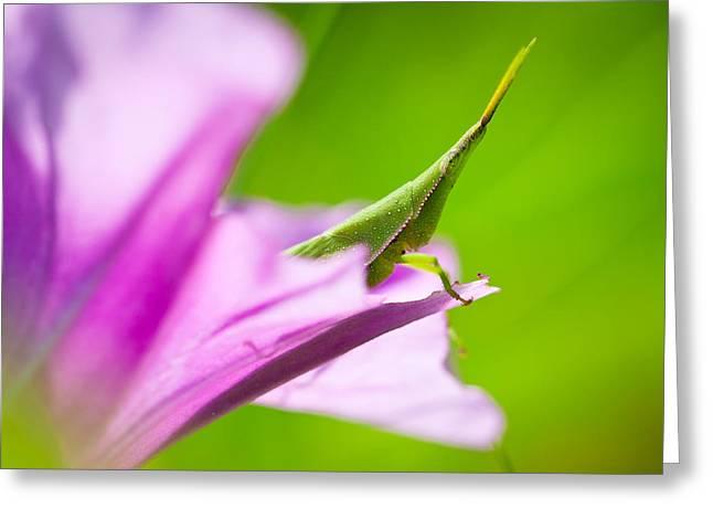 Flower Hopping Greeting Card by Johan Larson
