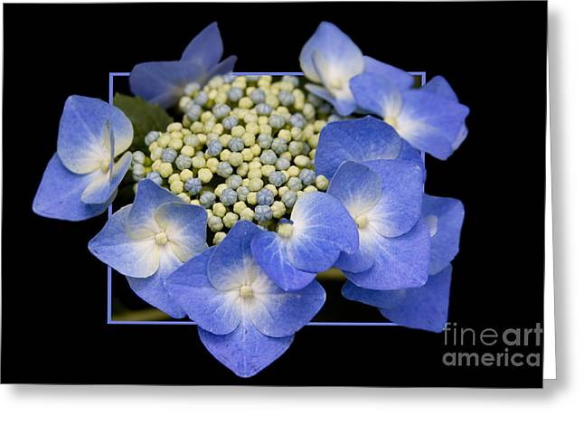Flower In Frame -11 Greeting Card