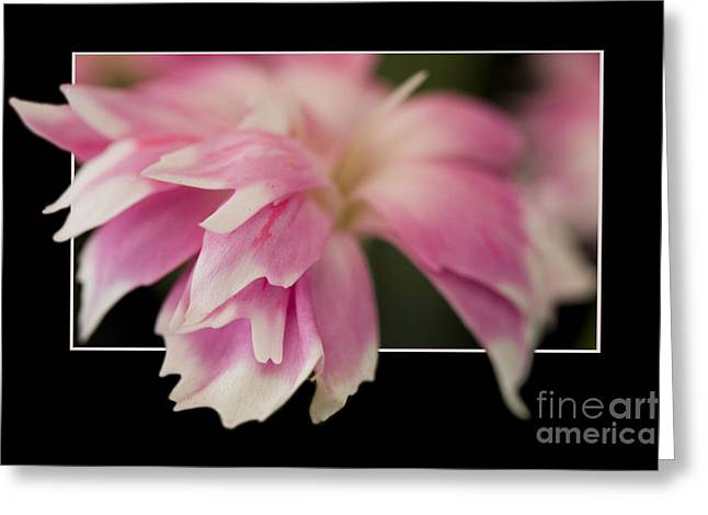 Flower In Frame -2 Greeting Card
