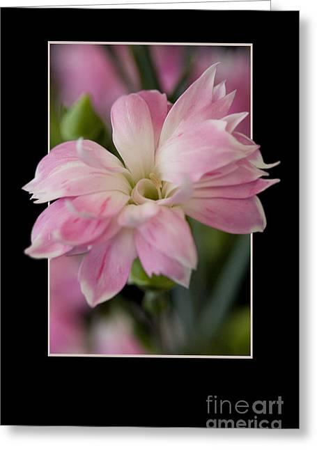 Flower In Frame -3 Greeting Card