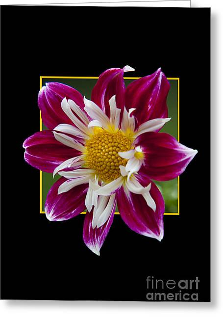 Flower In Frame -5 Greeting Card