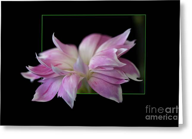 Flower In Frame Greeting Card