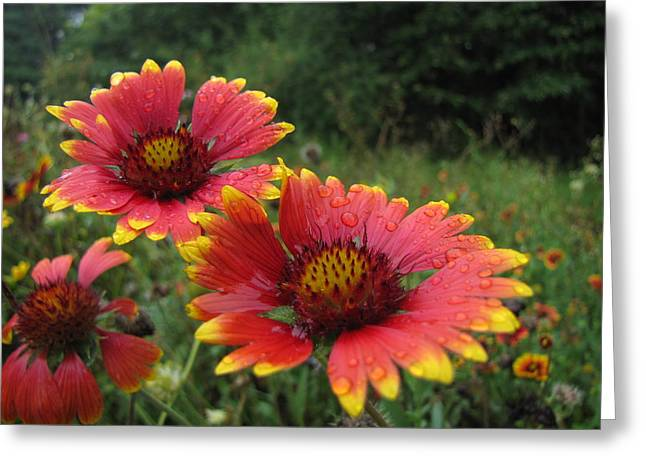 Greeting Card featuring the photograph Flower by John Crothers