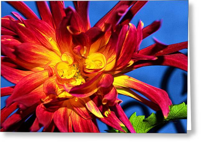 Greeting Card featuring the photograph Flower by Kelly Reber