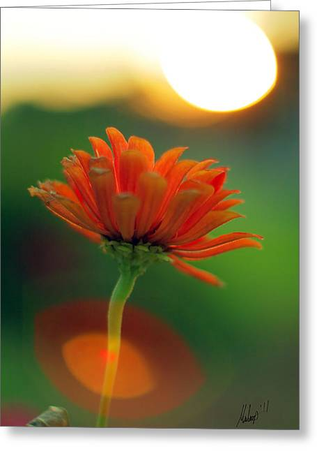 Flower Light Greeting Card