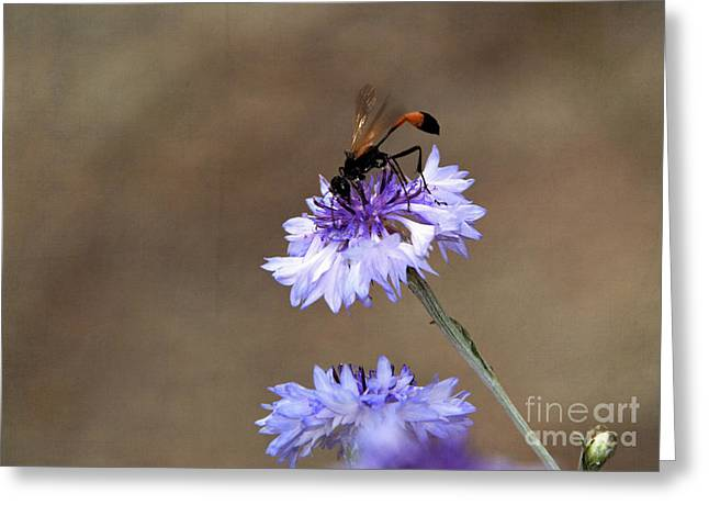 Greeting Card featuring the photograph Flower Meal by Tamera James