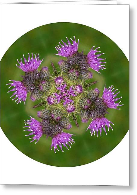 Greeting Card featuring the photograph Flower Of Scotland by Lynn Bolt