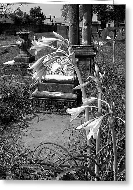 Flower Old Grave Greeting Card by Floyd Smith