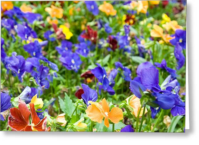 Flower Palette Greeting Card by Laura George