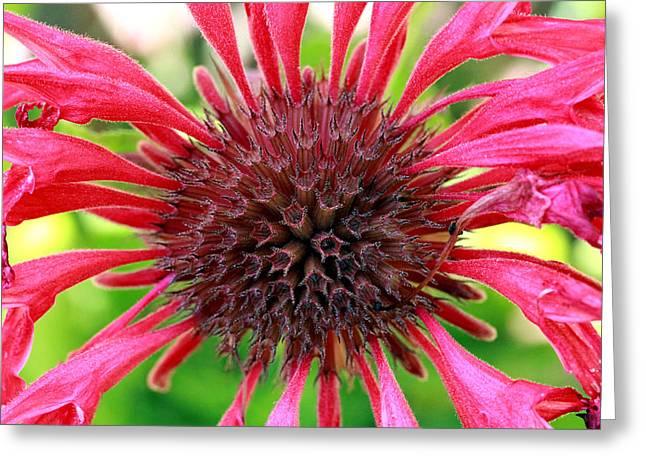 Flower Pink Greeting Card by Mark Ashkenazi