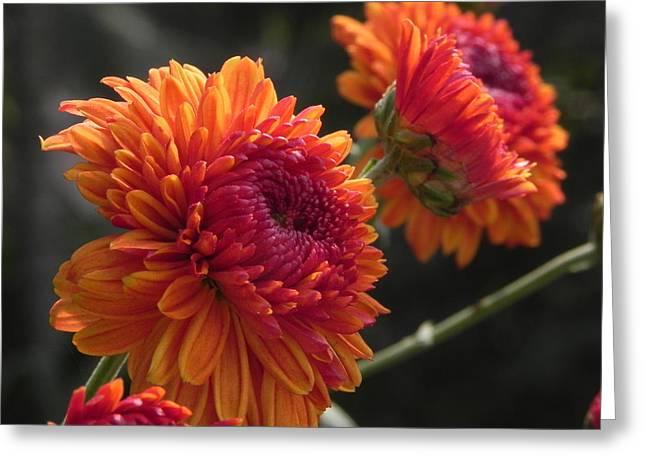 Flower Pompom Greeting Card by Arindam Raha
