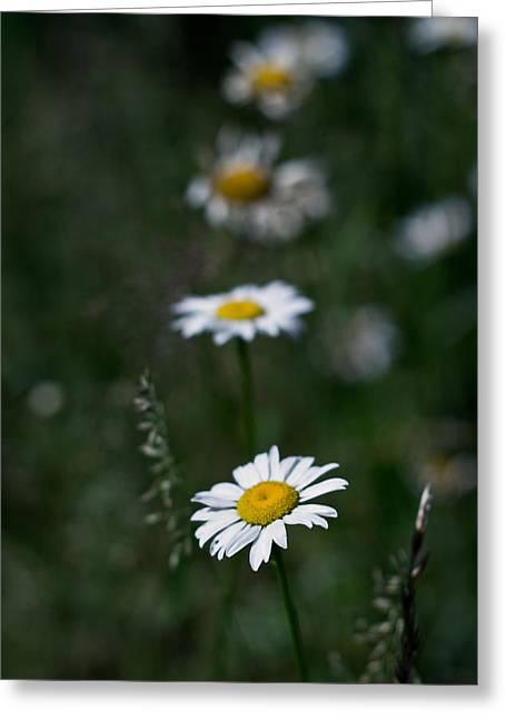 Flower Trail Greeting Card by Stephen Thomason