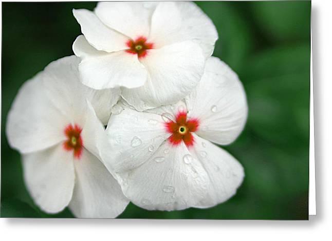 Flower Trio Greeting Card by Nancie Rowan