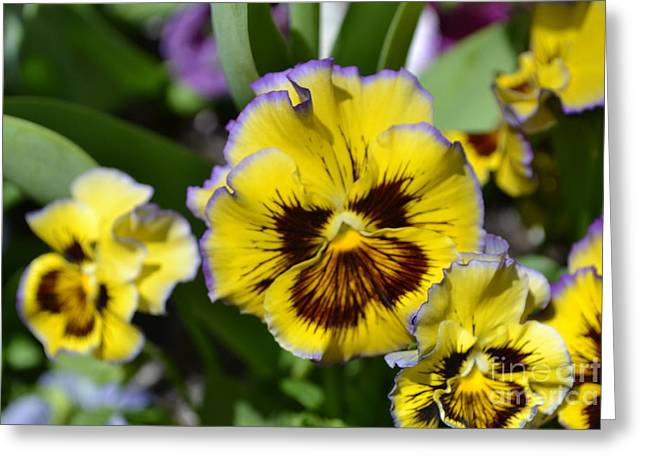 Flower With Pruple Trim Greeting Card by Artie Wallace