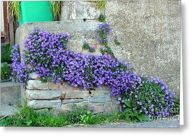Flowered Steps Greeting Card by Rene Triay Photography