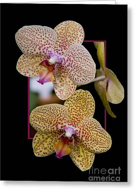 Flowerin Frame -8 Greeting Card