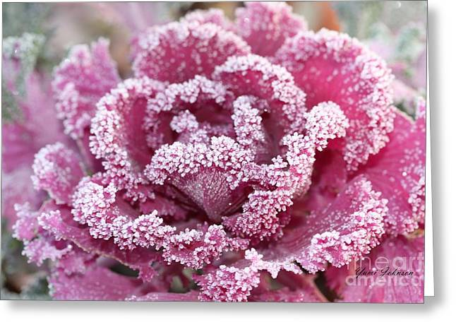 Greeting Card featuring the photograph Flowering Cabbage by Yumi Johnson