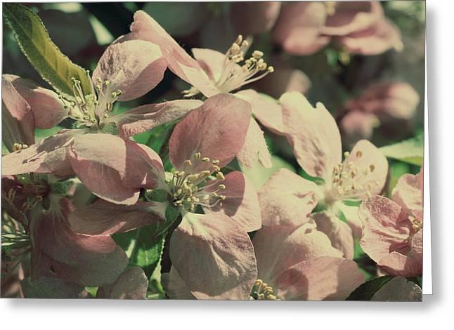 Flowering Crabapple Muted Greeting Card by Mark J Seefeldt