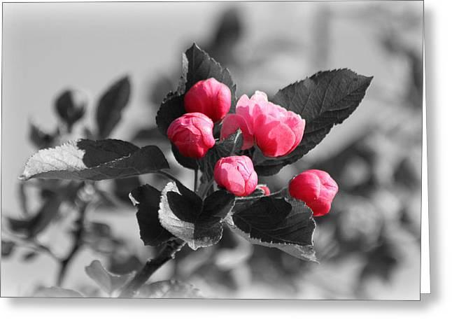 Flowering Crabtree In Select Color Greeting Card by Mark J Seefeldt