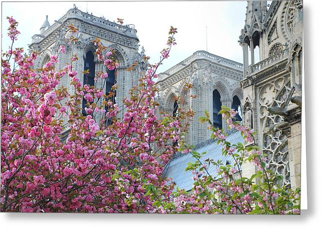 Flowering Notre Dame Greeting Card by Jennifer Ancker