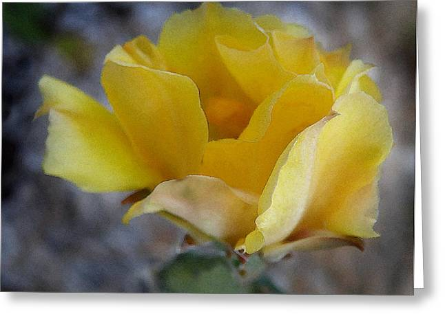 Flowering Prickly Pear Cactus In Florida Greeting Card